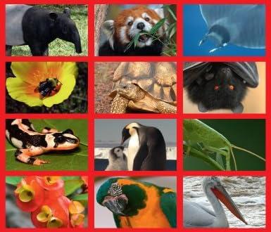 IUCN レッドリスト 世界の絶滅危惧生物図鑑
