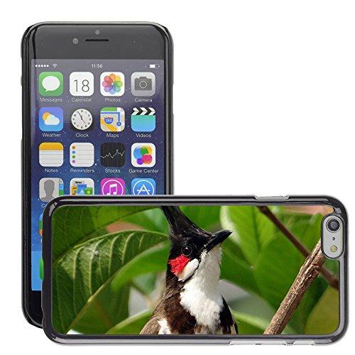 """Just Phone Cases Hard plastica indietro Case Custodie Cover pelle protettiva Per // M00129232 Bulbul orphée Pycnonotus jocosus // Apple iPhone 6 PLUS 5.5"""""""
