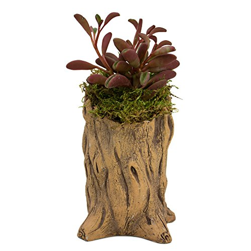 Natural Elements Stump Planter (Skinny) – Realistic Woodland-Themed with Intricate Weathered bark Detail + Fiber Soil + Moss Mulch. Grow Succulents, Cactus, African Violets. Striking in Any Décor.