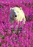 死ぬまでに見たい!絶景のシロクマ