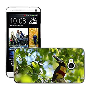 Hot Style Cell Phone PC Hard Case Cover // M00109099 Pteroglossus Bird Tree Leaves Branch // HTC One M7