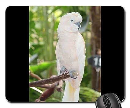 Amazon com : Mouse Pads - White Cockatoo Parrot Bird White