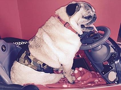 Glenndarcy Dog Pants Stecker Hund Urin Inkontinenz Wasserdicht Bauchband/-/waschbar Pad Option/-/Kleine bis Med Lang/-/Serengeti