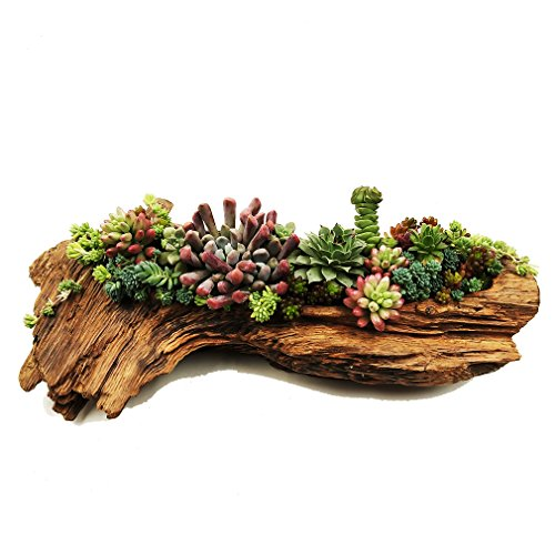 Succulent Planters Cactus Plant Pots Indoor Samll Flower and Aloe Vera Plants Pots Containers Pine Tree Root Wood Natural Shape Planters with A Hole Plants not Included (Cactus Bowl Planter)