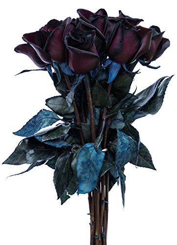 Black Roses Bouquet by Flower Explosion | Real Fresh Tinted Black Roses - 12 (Black Rose Flower)
