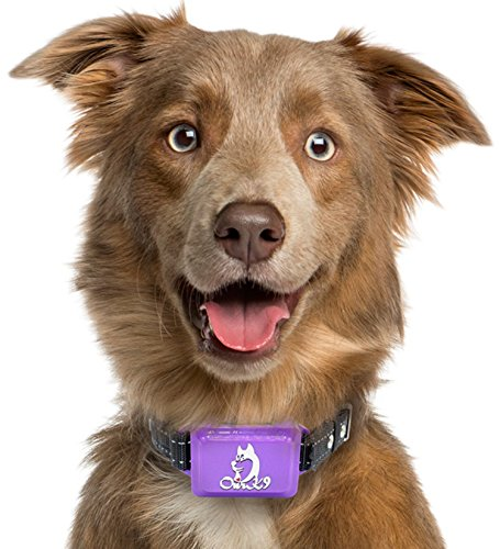 Bark Collar Large Dog | Barking Collar | Shock Collar for Dogs Large Breed | Barking Collar for Large Dogs | Waterproof Shock Collar for Dogs | Dog Bark Collars for Large Dogs For Sale