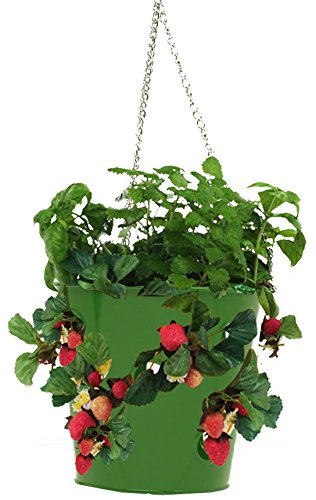 (HiT 8396E SA Galvanized Hanging Strawberry Herb Floral Planter, Sage)
