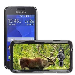 Etui Housse Coque de Protection Cover Rigide pour // M00113107 Caribú de Alaska Fauna silvestre Norte // Samsung Galaxy Ace4 / Galaxy Ace 4 LTE / SM-G313F