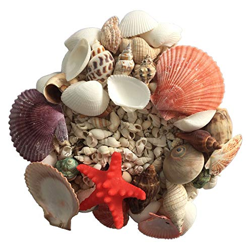 - PIVBY Sea Shells Mixed Tiny Miniature Beach Seashells Candle Making,Home Decorations, Beach Theme Party Wedding Decor, DIY Crafts, Fish Tank and Vase Fillers (14oz)
