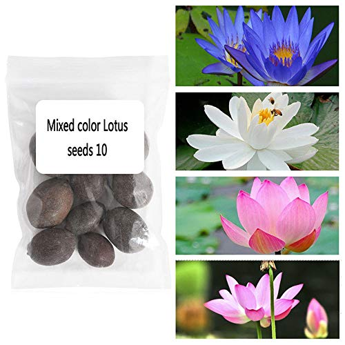 - Go Garden Mixed Color: 10Pcs Bowl Lotus Aquatic Plants Beautiful Water Lily Seeds Flower Seeds Bonsai