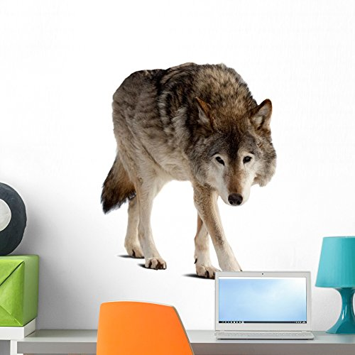 Wolf Wall Decal by Wallmonkeys Peel and Stick Graphic