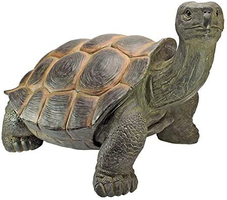 Amazon Com Design Toscano The Cagey Tortoise Statue Garden