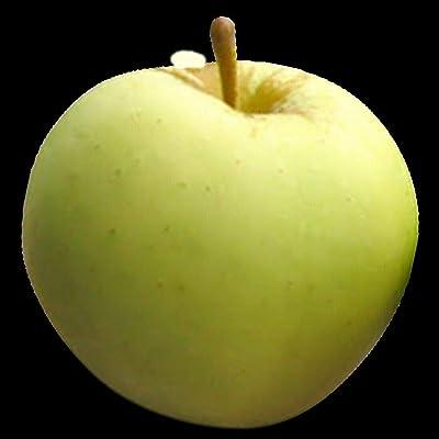 AchmadAnam - Live Plant - Apple LODI Orchard Fruit Tree Semi-Dwarf 3-4 ft : Garden & Outdoor