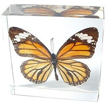 Amazon.com: Monarch Butterfly Pisapapeles (3 x 3 x 1