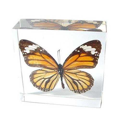 Nature Gift Store Real Monarch Butterfly Paperweight: Professionally Displayed and Mounted in Lucite Block
