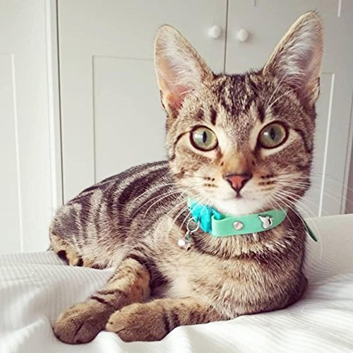 Kittyrama Visto en Vogue. Collar para Gato Meadow Galardonado Cat Friendly: Amazon.es: Hogar