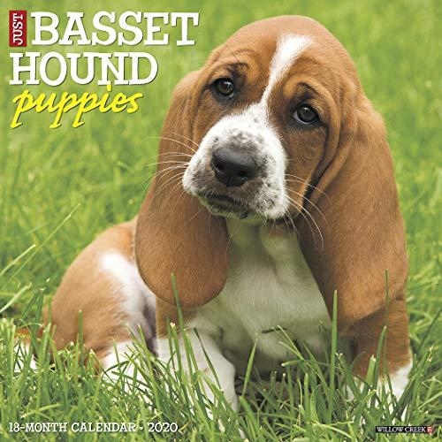 Just Basset Hound Puppies 2020 Wall Calendar (Dog Breed Calendar)