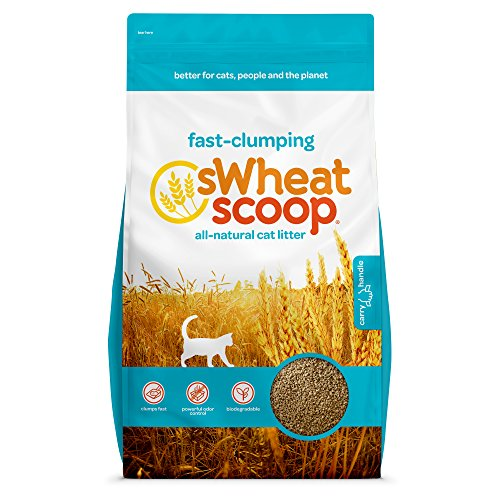 sWheat Scoop Fast-Clumping All-Natural Cat Litter, 36lb Bag.