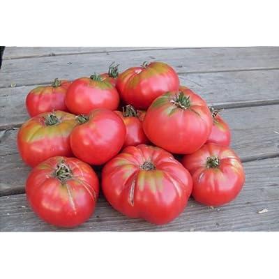 Clovers Garden Caspian Pink Tomato Plant- Two (2) Live Plants – Not Seeds – in 3.5 Inch Pots : Garden & Outdoor