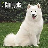 Samoyeds Wall Calendar Dogs 2017 {jg} Best Holiday Gift Ideas - Great for mom, dad, sister, brother, grandparents, , grandchildren, grandma, gay, lgbtq.