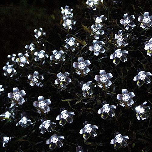 The Light Garden Cherry Blossom in US - 7