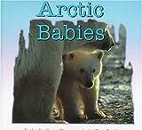 Arctic Babies, Kathy Darling, 0802784135