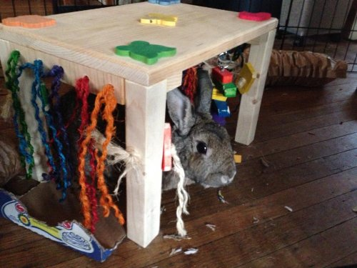 Original Activity Zone Rabbit Toy Buy Online In Uae