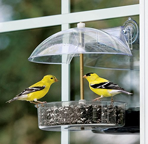 Droll Yankees The Winner Window Bird Feeder 6.5 In. Dia Polycarbonate Yellow