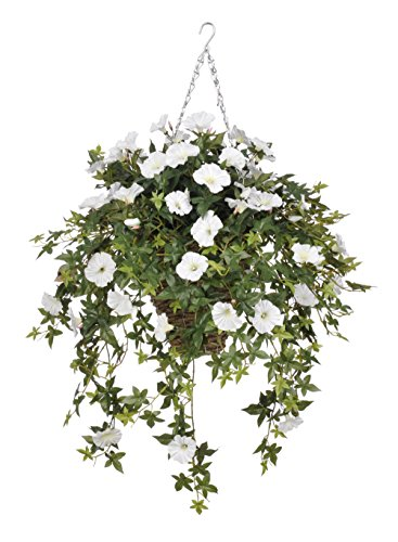 Morning Glory Hanging Plant in Reed Basket Flower Color: White (Flowers In The Basket)