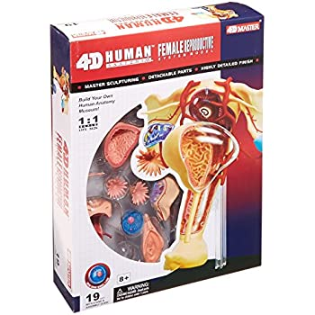 Amazon Famemaster 4d Vision Human Female Reproductive Anatomy