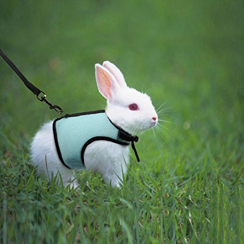 Pictures of MEWTOGO 2 pcs Adjustable and Breathable Bunny 3