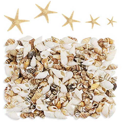 Mini Beach Natural Shells - Yexpress 186 pcs Mini Tiny Sea Shells Mixed Ocean Beach Seashells, Natural Starfish for Home Decorations, Beach Theme Party, Candle Making, Wedding Decor, DIY Crafts, Fish Tank and Vase Filler