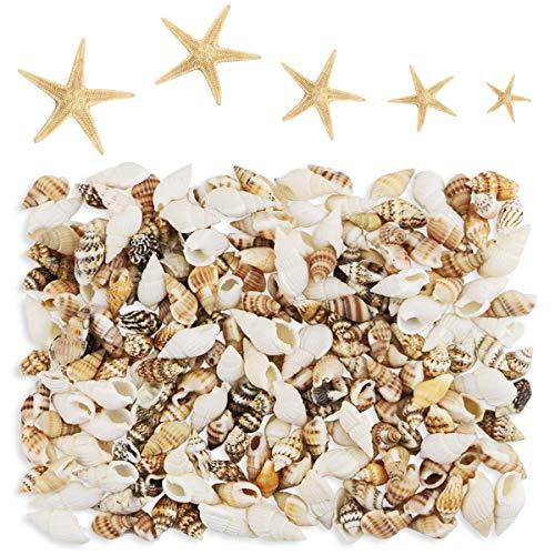 Yexpress 186 pcs Mini Tiny Sea Shells Mixed Ocean Beach Seashells, Natural Starfish for Home Decorations, Beach Theme Party, Candle Making, Wedding Decor, DIY Crafts, Fish Tank and Vase Filler ()