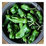 David's Garden Seeds Pepper Hot Padron OS698 (Green) 50 Heirloom Seeds