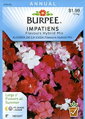 Burpee 30957 Impatiens Flavours Hybrid Mix Seed Packet