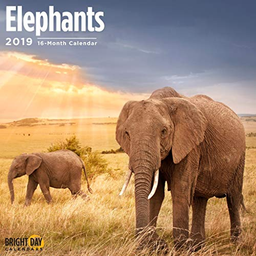Wild Animals Wall Calendars by Bright Day Calendars 16 Month Wall Calendar 12 x 12 Inches (Elephants - Elephant Calendar