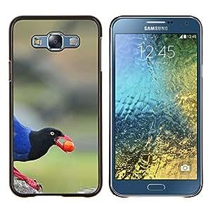 Dragon Case - FOR Samsung Galaxy E7 E7000 - jungle bird beak berry nature blue - Caja protectora de pl??stico duro de la cubierta Dise?¡Ào Slim Fit