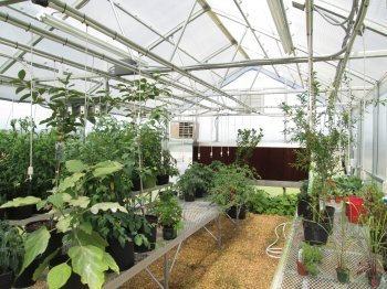 Wallace Premium Educational Greenhouse