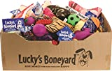 Petsport 22222 60 Piece Luckys Boneyard Tear Away Carton Assorted Display