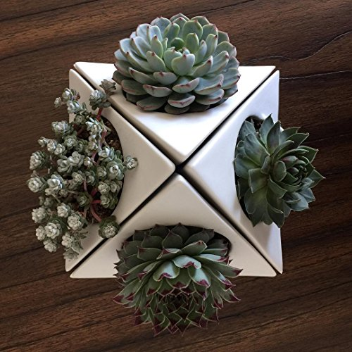 Unique Ceramic Planter Pot for Succulent Cactus and Airplant - Includes Self Watering Saucer Drip Tray, Drainage Hole, Triangle Corner Shape, Matte White 6-Inch (4 pack set)