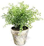 Light Green Boxwood 10 Inch Artificial Topiary Plant in Faux Stone Pot