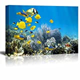 Canvas Prints Wall Art - Underwater Landscape with Couple of Royal Angelfishes | Modern Wall Decor/ Home Decor Gallery Wraps Giclee Print & Wood Framed. Ready to Hang