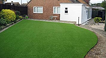 carpet grass. seedscare india carpet grass seed (5000 seeds pack)