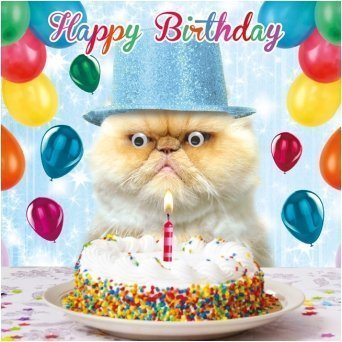Grumpy Cat Cake Birthday Card Party Pooper Goggly 3D Moving Eyes