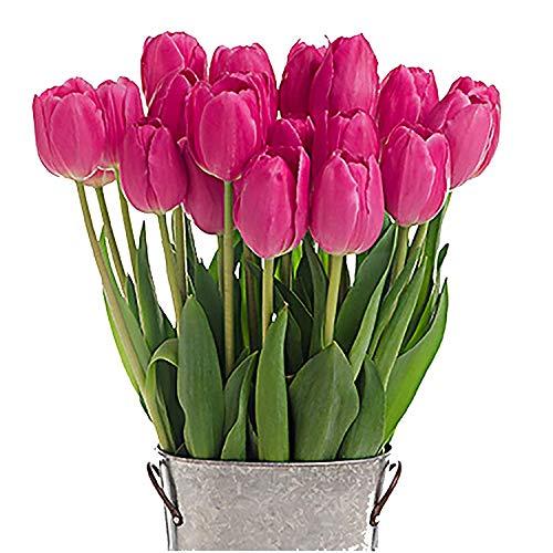 Stargazer Barn - Barcelona Tulip Bouquet - 2 Dozen Pink Tulips with French Bucket Style Vase - Farm Fresh