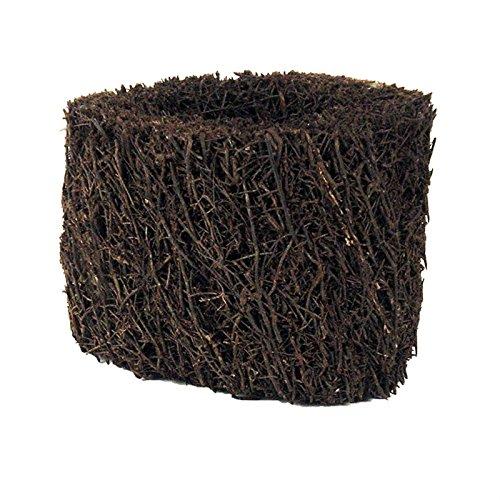 Tree Fern Pot (8 Inch)