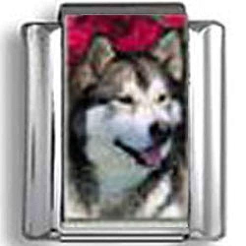 Alaskan Malamute Dog Photo Italian Charm