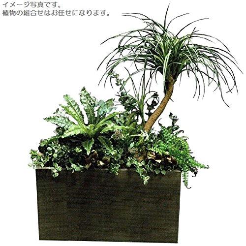 人工観葉植物 アーティフィシャルグリーンアレンジ 鉢付き 幅95cm rg-001 B074FSS17V