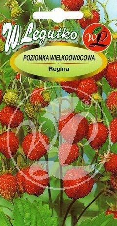 Polish Wild Strawberry Seeds - Poziomka - Regina (Wild Strawberries Seeds)