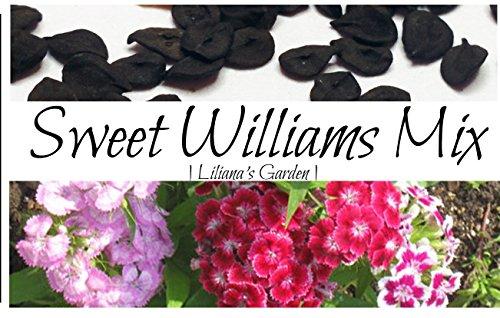 Flower Seeds - Sweet William Seeds- Mixed Colors - Dianthus barbatus - Biennial - Liliana's Garden (William Sweet Grow)